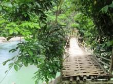 indonezja dżugla